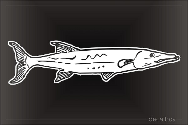 Barracuda Window Decal
