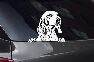 Beagle Looking Out Window Decal