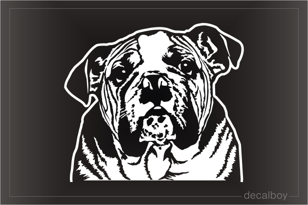 English Bulldog Face Decal