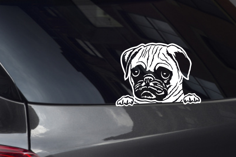 Pug Face Looking Out Window Decal